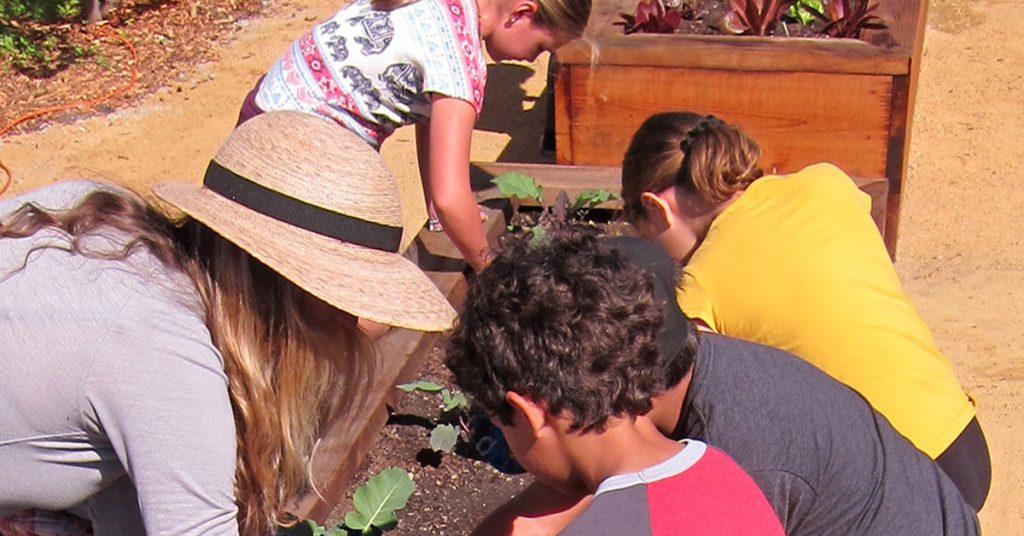 Image of elementary school children gardening